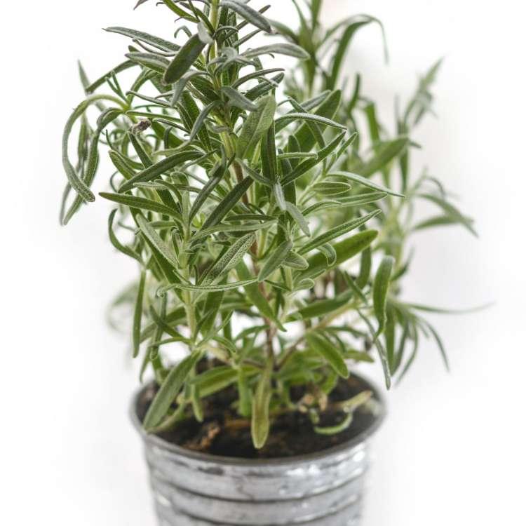 What are vajikaran herbs?